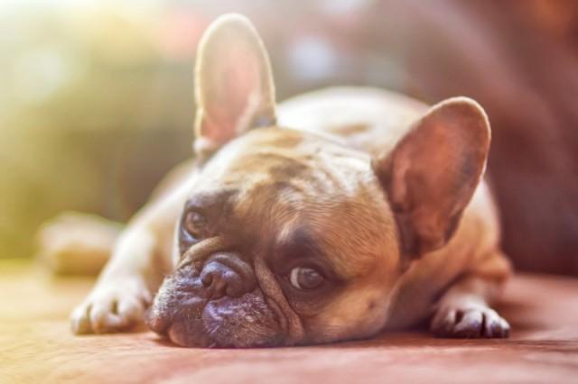HUNTER sætter din hund eller kats behov i fokus med eksklusive og innovative produkter