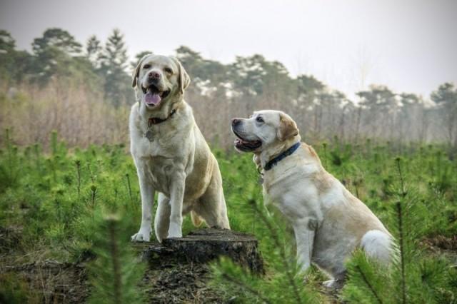 Sådan vælger du det rigtige hundefoder til din hund